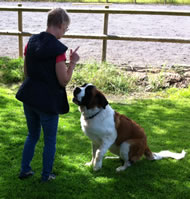 Cindy Sharville training our St Bernard for Finding Neverland in the UK 2012