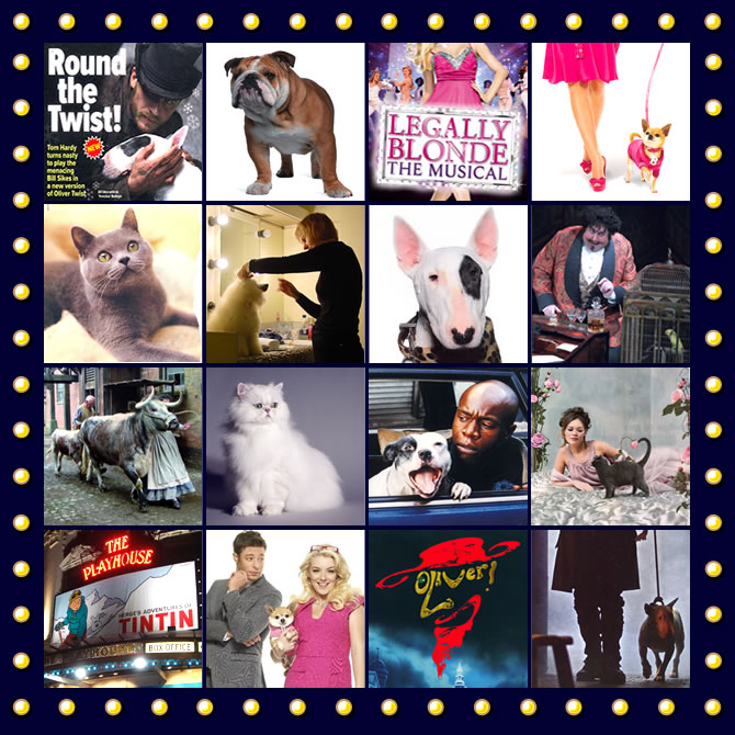 Shown here are a range of animals we have trained and supplied for Films, television, theatre and advertising.